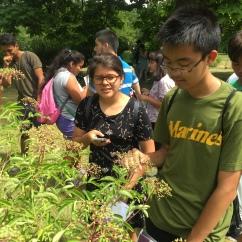 Green Ambassadors photo 6 071816